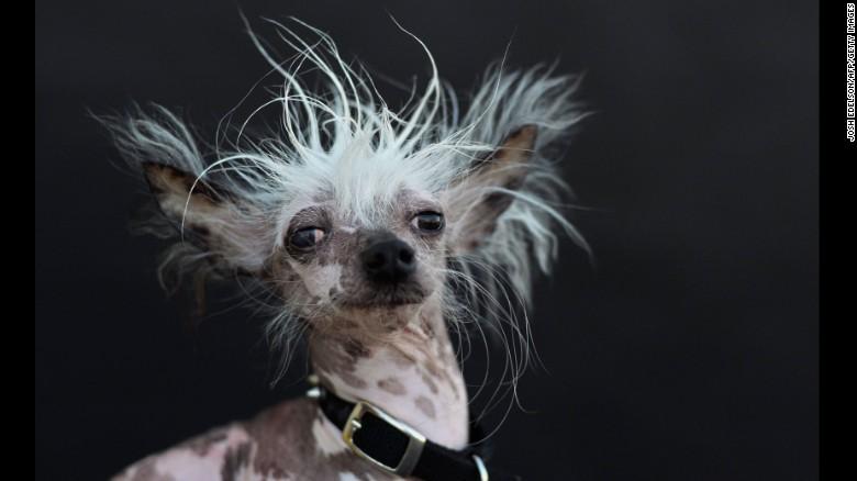 150627125003-04-ugliest-dog-0627-exlarge-169