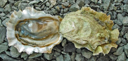 Deep-Bay-Oysters