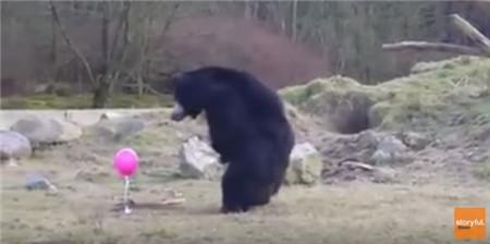 black-bear-balloon001