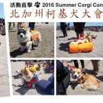 【哇靠直击】 北加州柯基大会 Corgi Con Summer