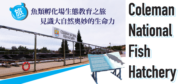 Coleman National Fish Hatchery — 魚類孵化場生態教育之旅
