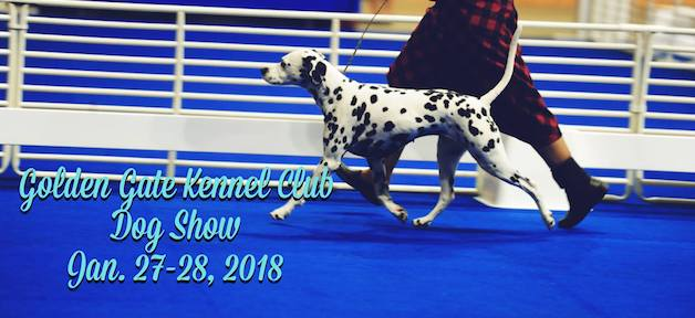 Golden Gate Kennel Club Dog Show 2018 狗狗汪汪伸展秀 (1/27-1/28)
