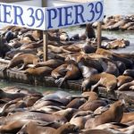 Anniversary of the Sea Lions' Arrival 海獅駐紮週年慶! (1/20-1/22)
