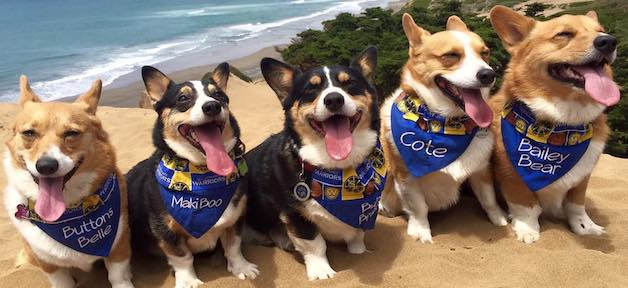 Nor Cal Corgi Con: Summer Edition 北加柯基夏季海灘日 (6/16)