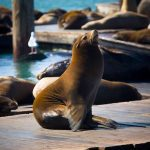 Anniversary of the Sea Lions' Arrival 海獅駐紮週年慶!(1/19-1/20)