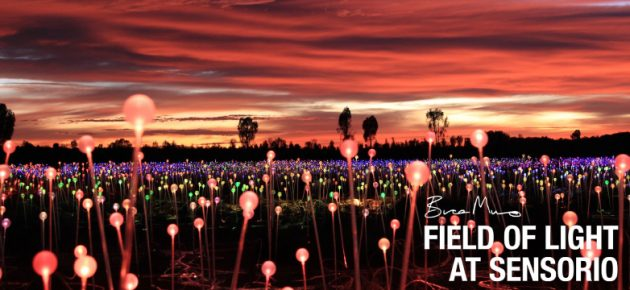 期間限定浪漫燈海!「原野星光展 Field of Light」加州展出中