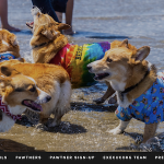 Nor Cal Corgi Con: Summer Edition 北加柯基夏季海灘日 (6/15)