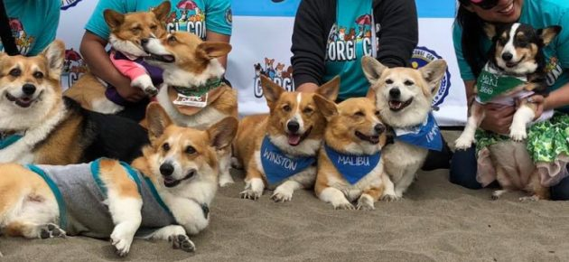 Nor Cal Corgi Con: Fall Edition 北加柯基秋季海灘日 (10/19)