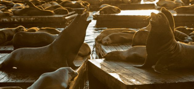Anniversary of the Sea Lions' Arrival 海獅駐紮週年慶!(1/17-20)
